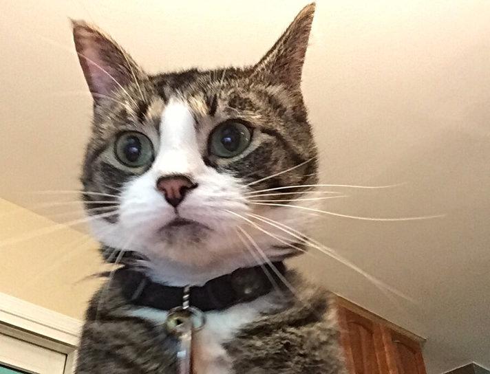 Cat webcam